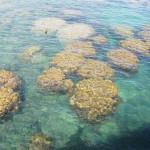 Korallenriff zum Schnorcheln