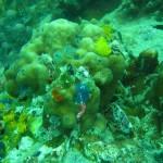 Korallenriff auf Koh Tao